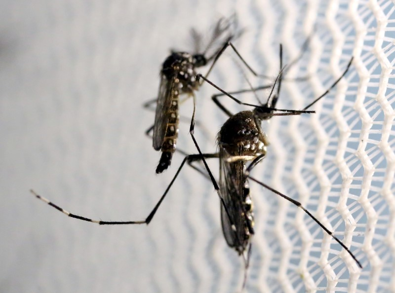 Florida to release genetically modified mosquitoes detractors blast 'Jurassic Park' experiment – Fox News