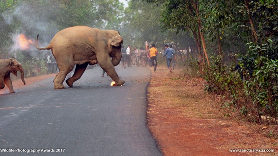 'Hell is Here' for burning elephants in award-winning photo