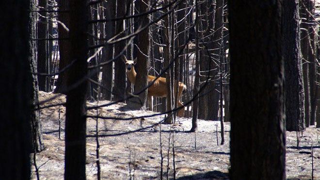 California environmentalists, logging industry lock horns over burned trees