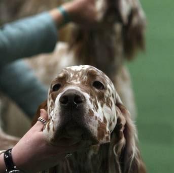National Dog Day: How Sadie saved Michael's life