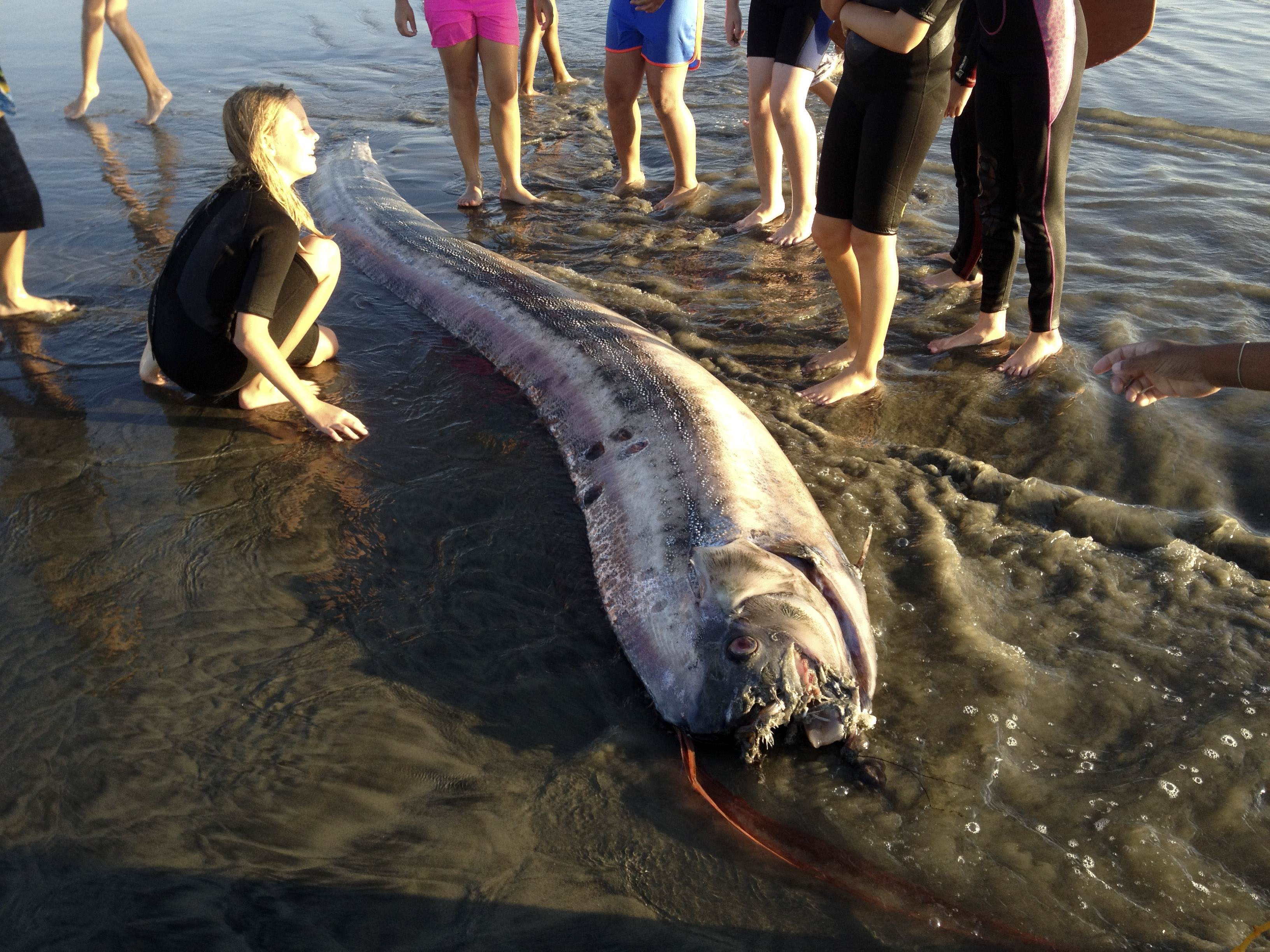 New 14-foot 'sea serpent' found in Southern California