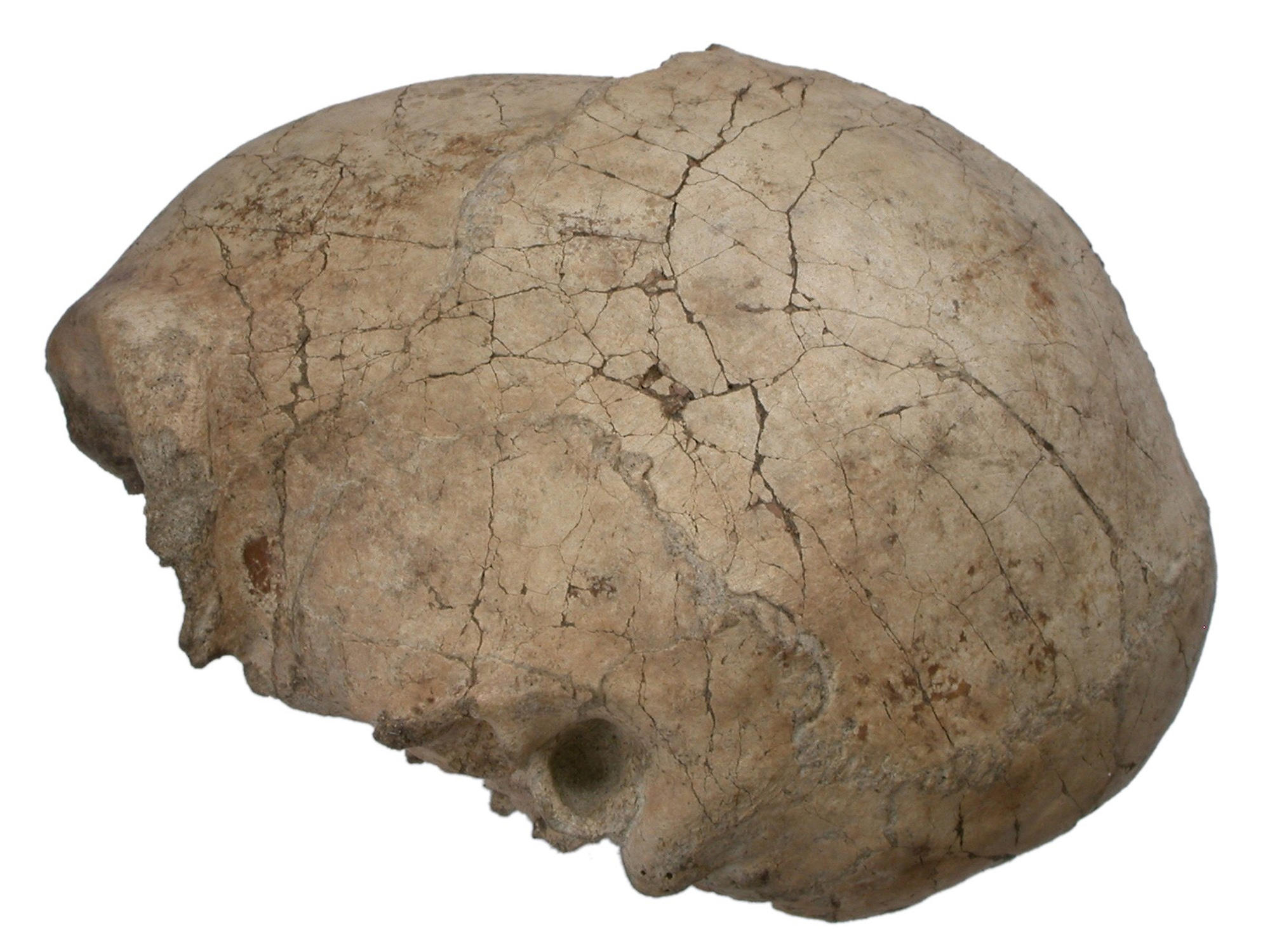 Homo erectus' last known appearance dates to about 117,000 years ago, study reveals