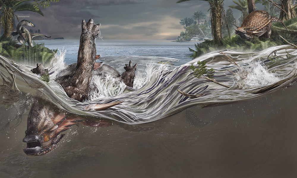 Sleeping dragon: How this dinosaur got preserved in 3-D