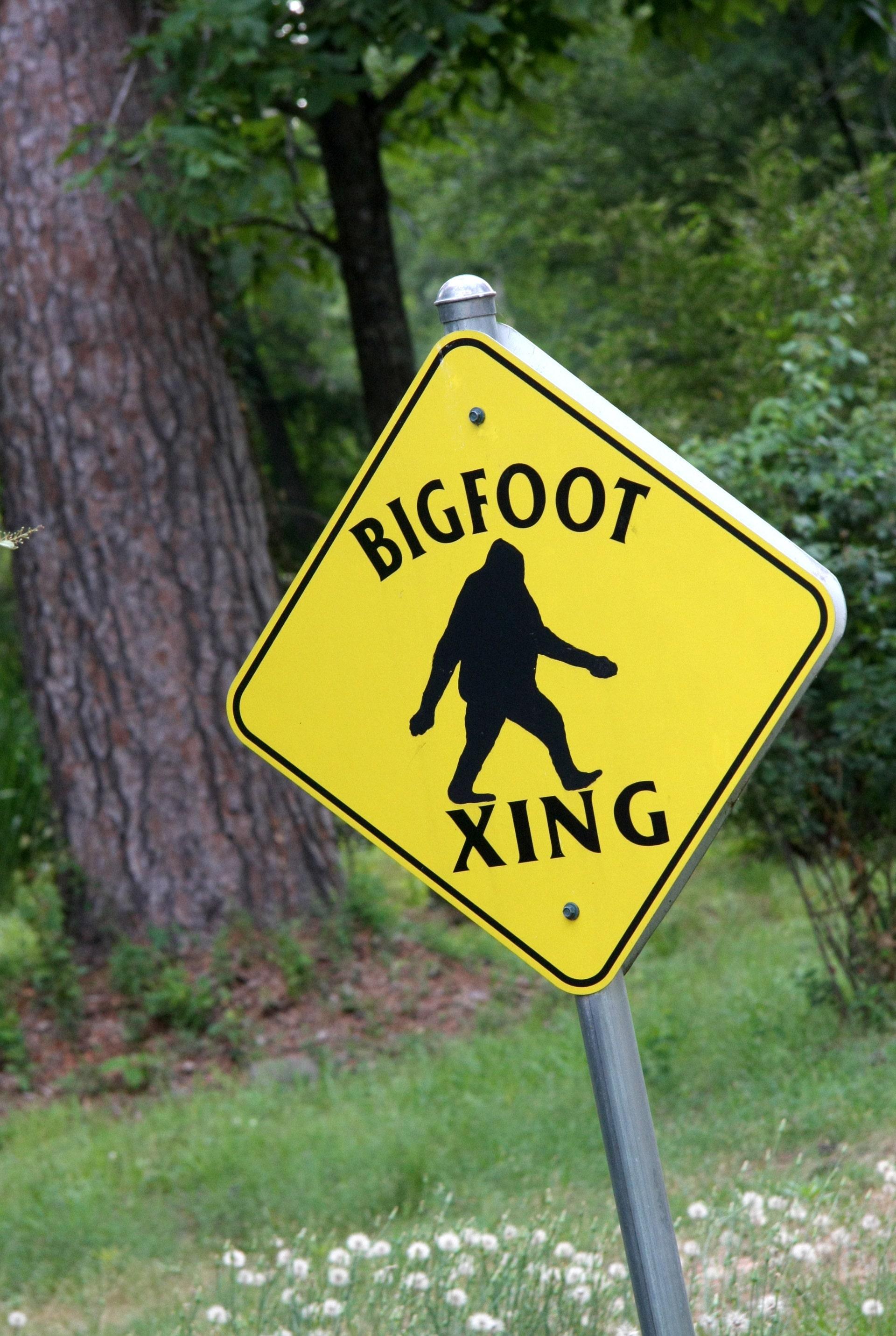 2 men claim 'Bigfoot' sighting in Ohio, video goes viral