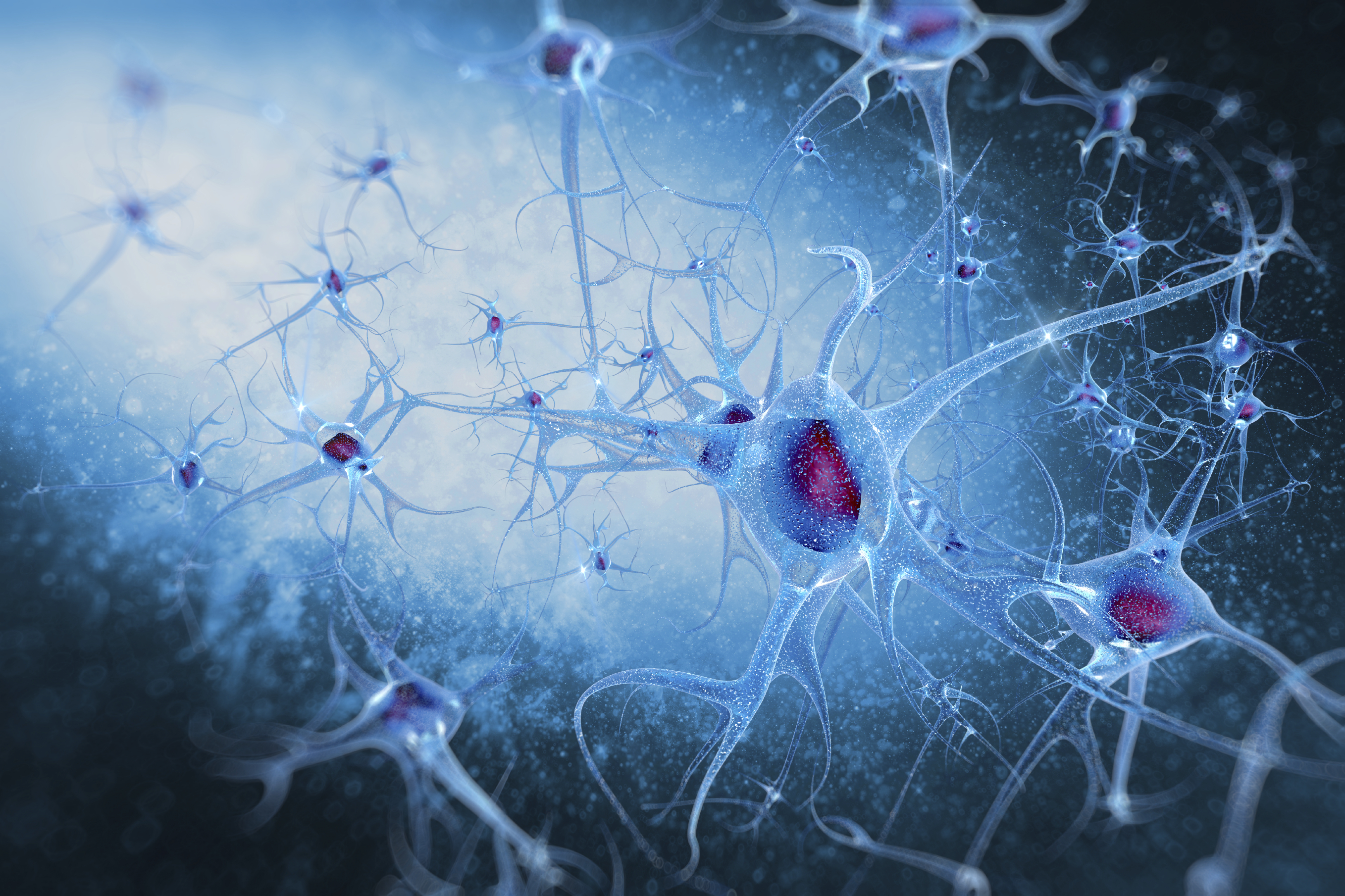 Boys' and girls' brains may show opposite effects after a trauma