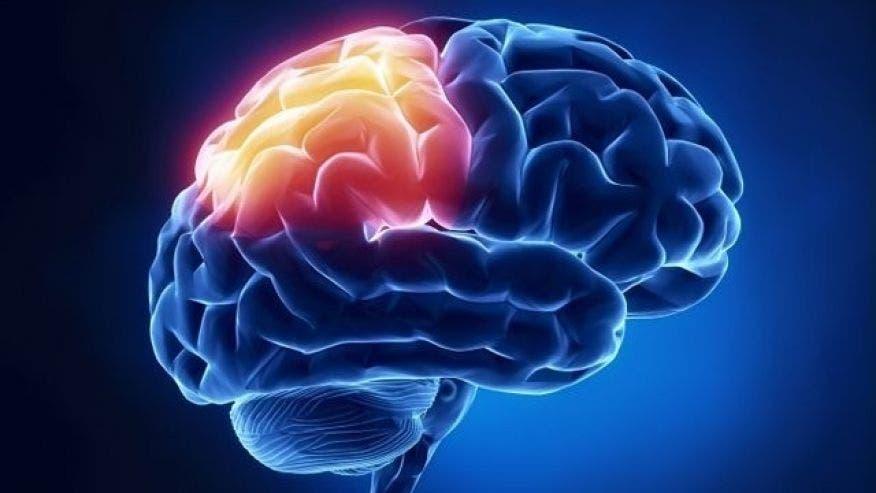 Mini-brains allow scientists to study brain disorders