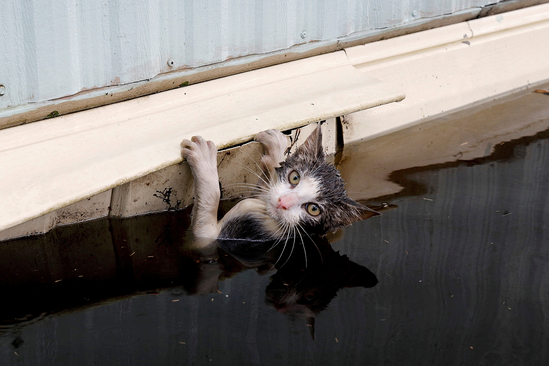 Hurricane Florence: Stranded pets get rescued from floodwaters in North Carolina