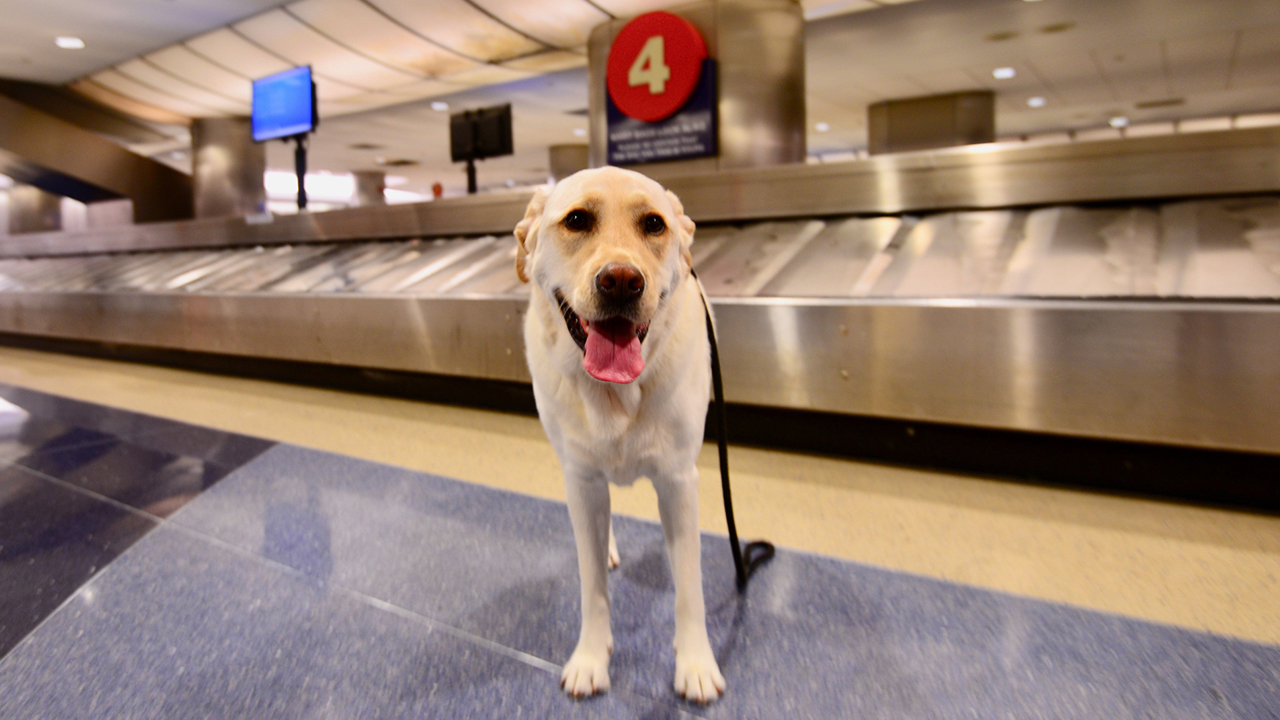 Dog reunited with family after airport escape