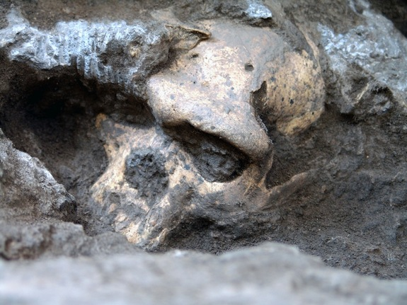 What we learned about human origins in 2013