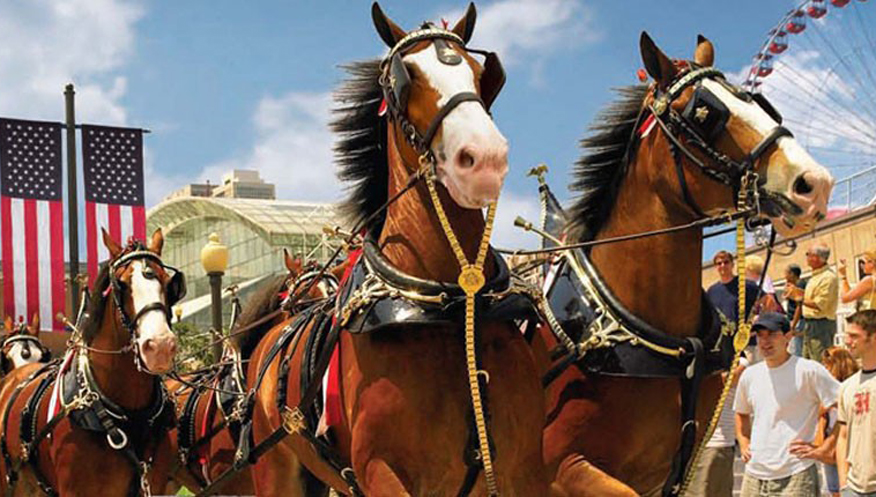 Budweiser Clydesdales going back in the stable for the holidays