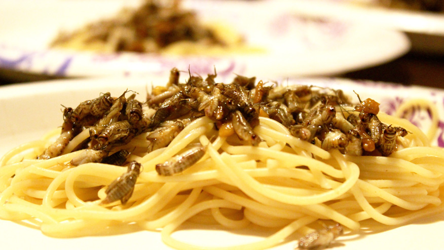 College student plans to eat bugs for 30 days—and hopes you will, too