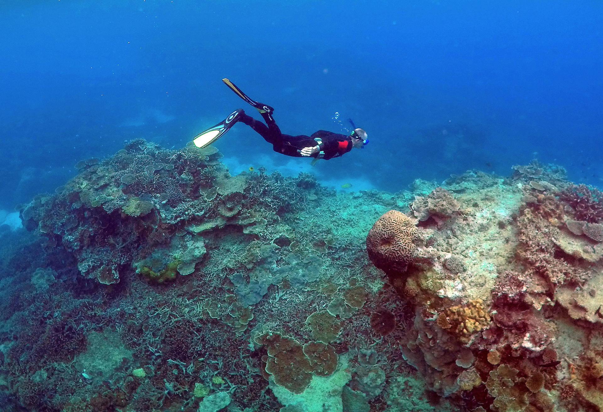 Science or silence? My battle to question doomsayers about the Great Barrier Reef