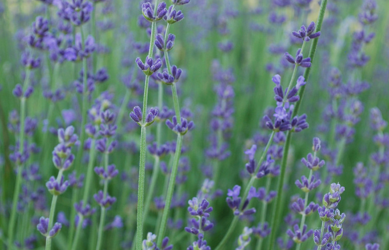 11 herbs every gardener should try to grow this summer