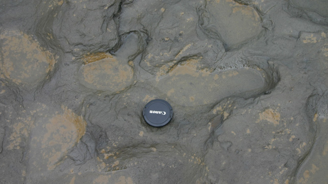 Scientists find 800,000-year-old footprints in England