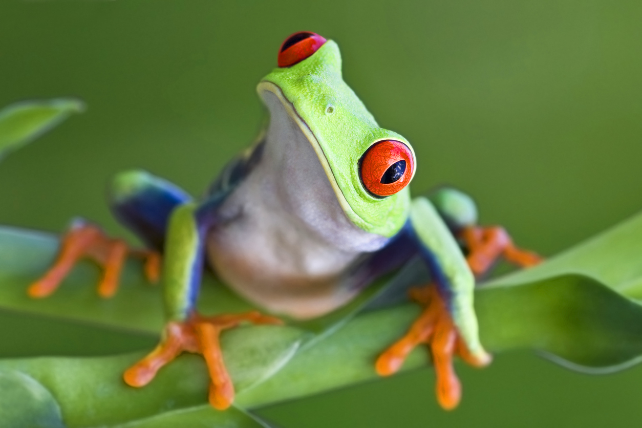 'Worst disease ever recorded' is responsible for 'frog apocalypse'