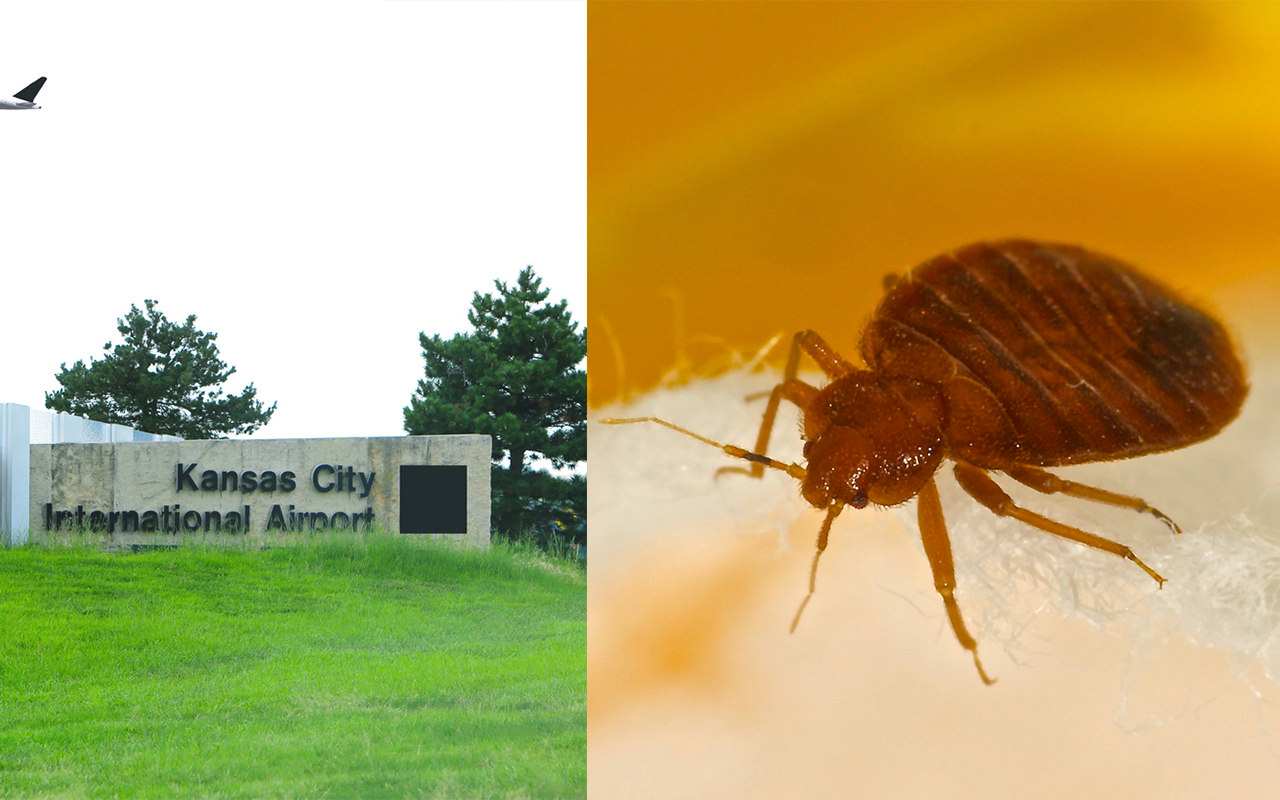 Bed bugs found in Kansas City International Airport sitting area