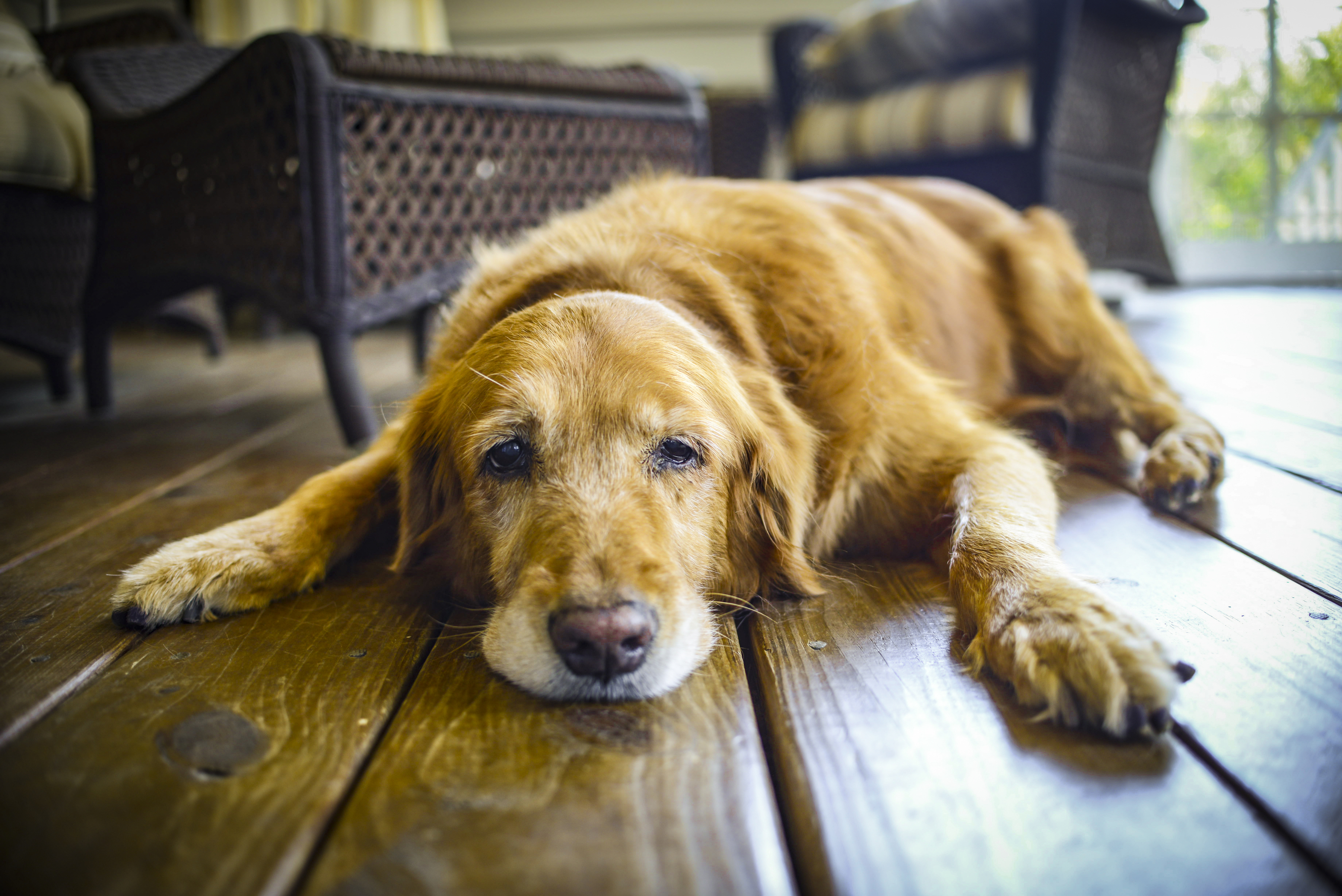 New York farm acts as retirement home for elderly dogs