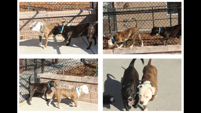 Neglected dogs become best friends after rescue