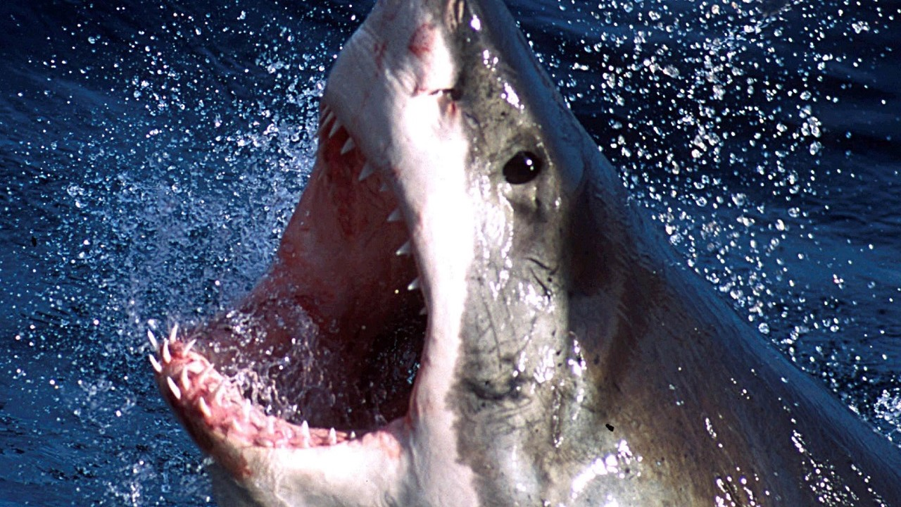 Westlake Legal Group rtxl60q Great white shark reveals razor-like teeth as it attempts to chomp photographer's camera Jennifer Earl fox-news/science/wild-nature/sharks fox news fnc/science fnc article 7eab7ee0-a6d8-55bf-baef-50536167c6c7