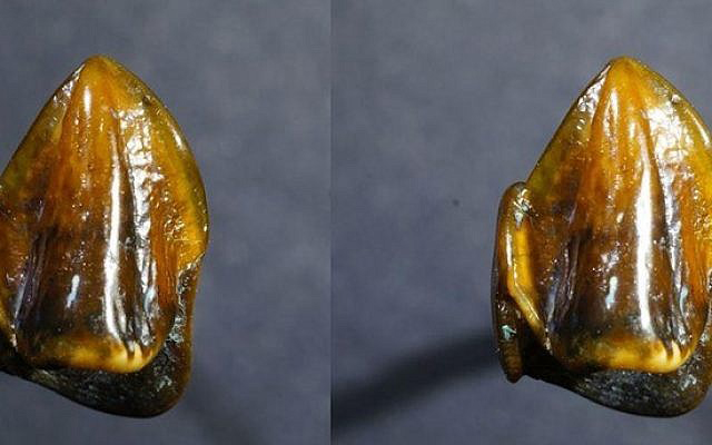 Fossilized teeth dating back 9.7 million years could 'rewrite' human history