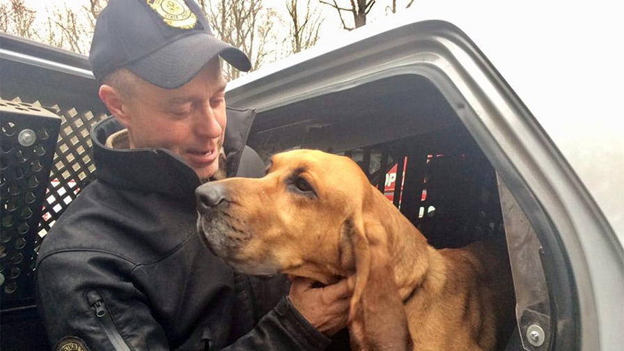 Out of the woods: Connecticut police dog found safe after 36 hours in wilderness
