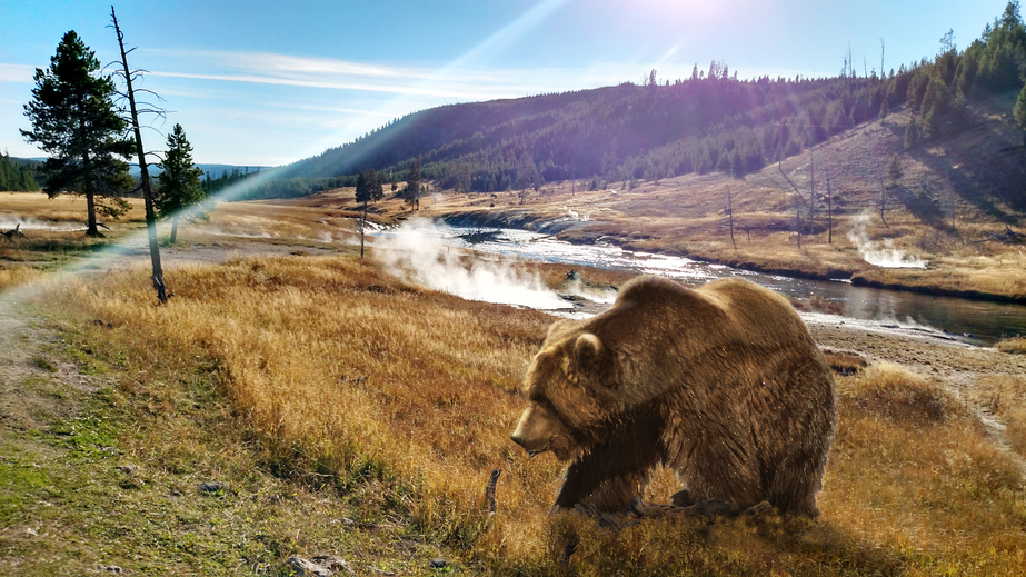 The best place to commit a crime in America? Yellowstone National Park