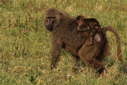 Idaho wildlife official's safari photos spark outrage