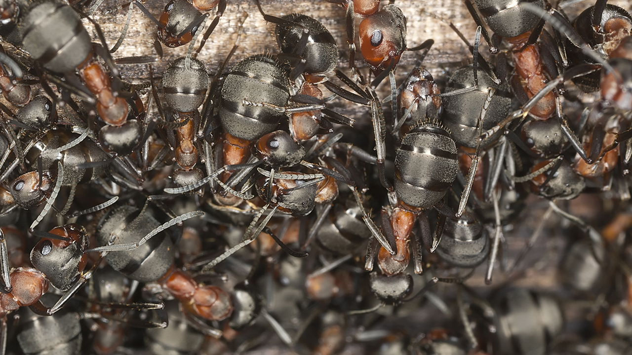 North Carolina family return from 3-day trip to find ant colony in car parked in lot