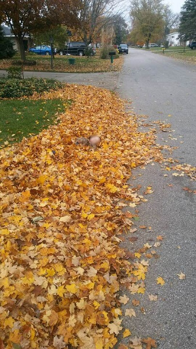 UPS driver snaps photo of boy in leaf pile to share message about safety