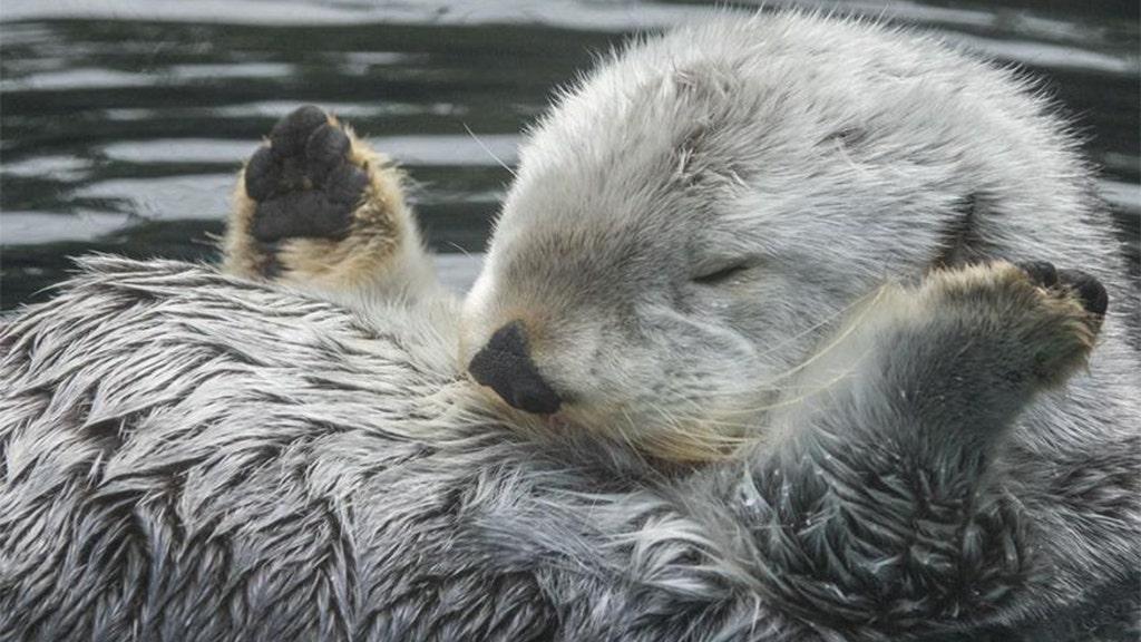 Inmitten COVID-19-Ausbruch, Monterey Bay Aquarium, andere bieten live-Erfahrungen aus dem Komfort von zu Hause