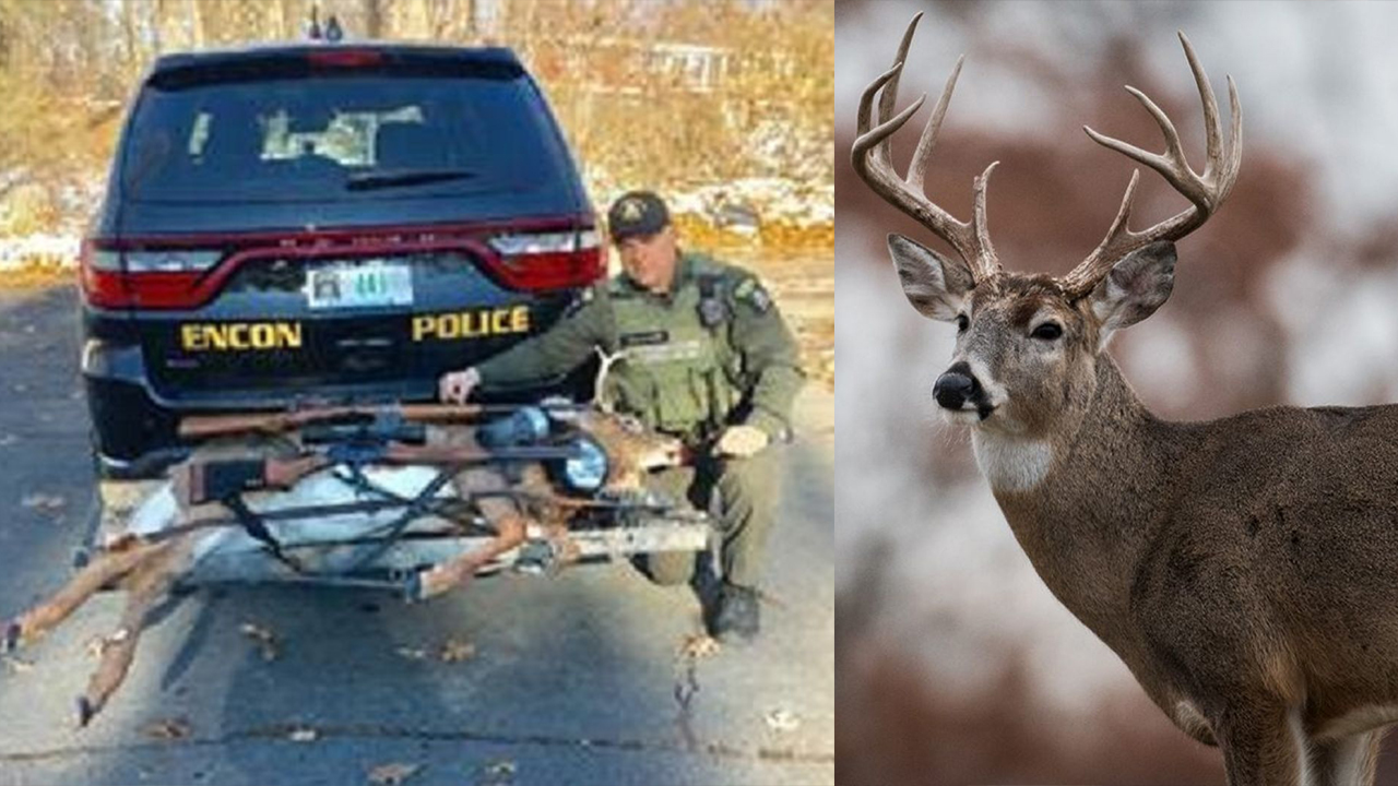 New York hunters fined after 'undead' deer jumps from truck