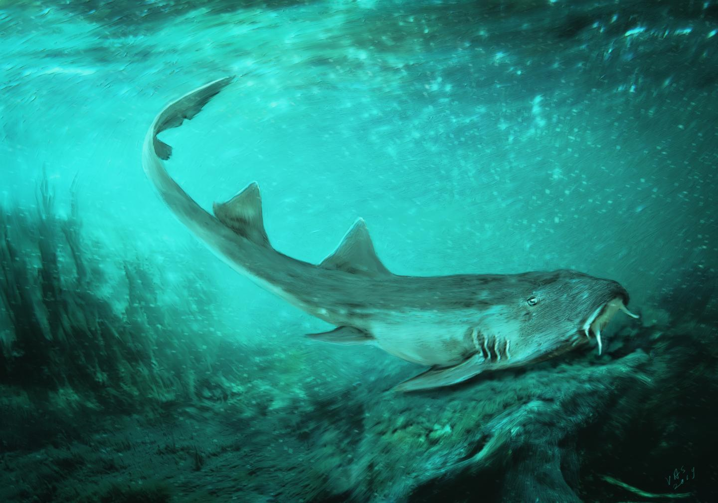 Prehistoric shark with 'spaceship-shaped teeth' discovered along the most famous Tyrannosaurus