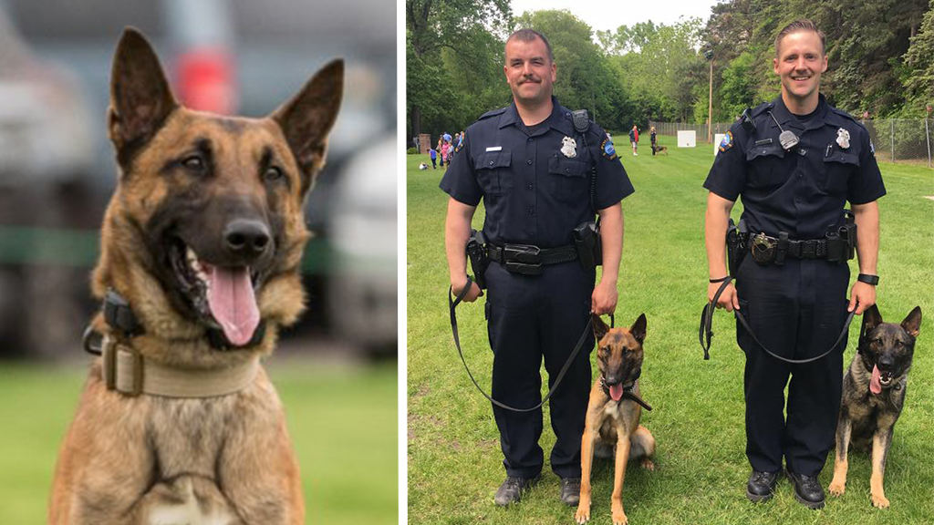 Minnesota officer wounded, K-9 killed in shoot-out with suspect