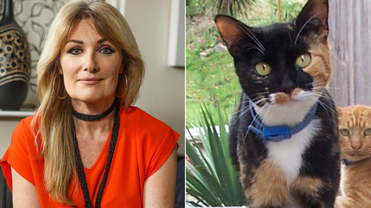 Woman links Lyme disease diagnosis to pet cat sleeping on bed