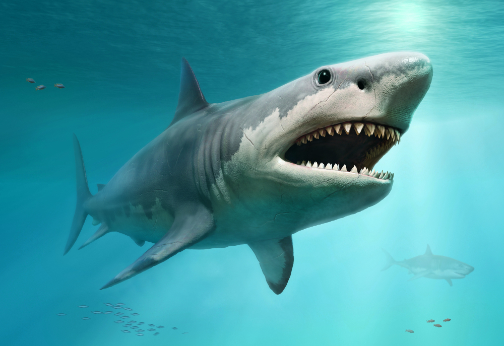 Megalodon fossils discovered all over the world thumbnail
