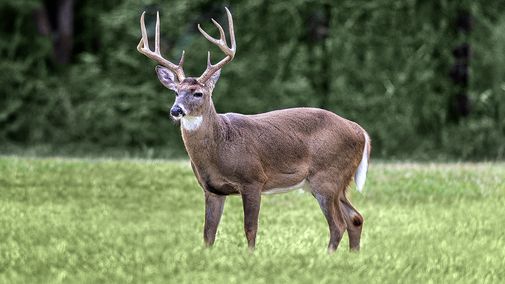 Deadly ?zombie? deer disease could possibly spread to humans, experts warn