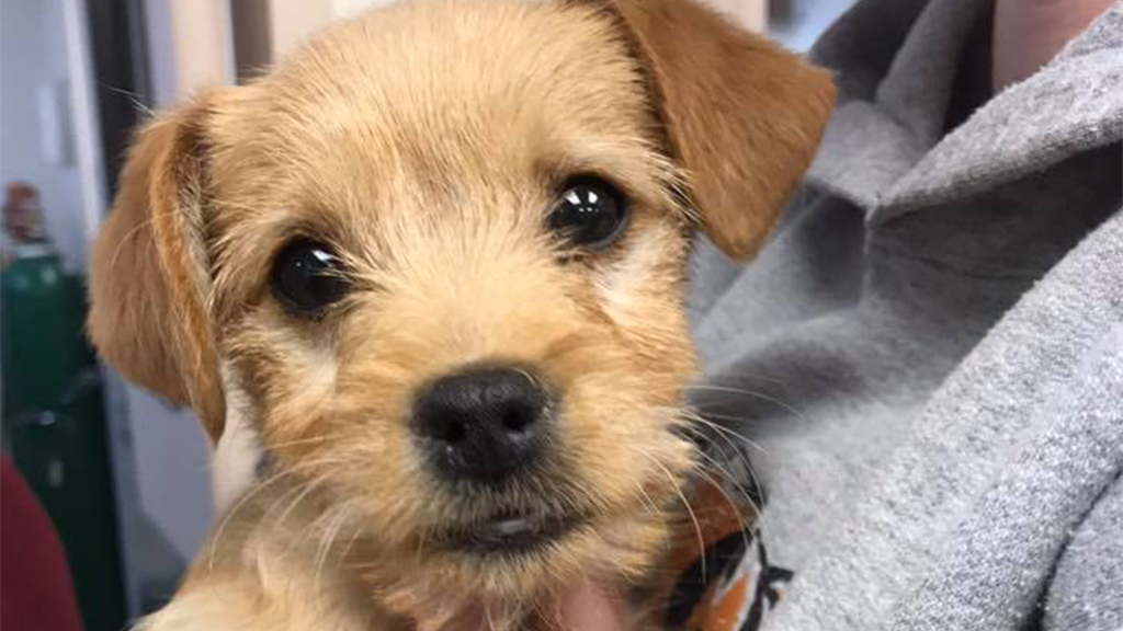 6-pound puppy dies after ingesting nearly 50 short ribs, shelter says