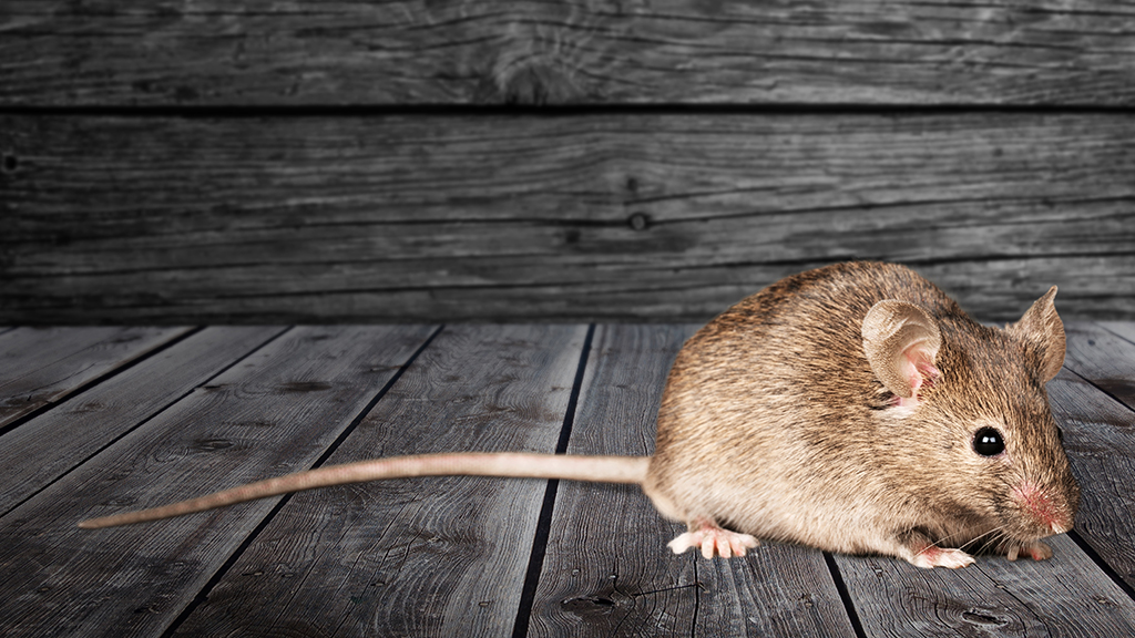Westlake Legal Group Mouse-iStock PETA to send humane mousetrap to White House to save viral mouse Louis Casiano fox-news/politics/executive/white-house fox news fnc/media fnc article 94065701-0e8c-59d9-b72f-1d3c3fd269c0
