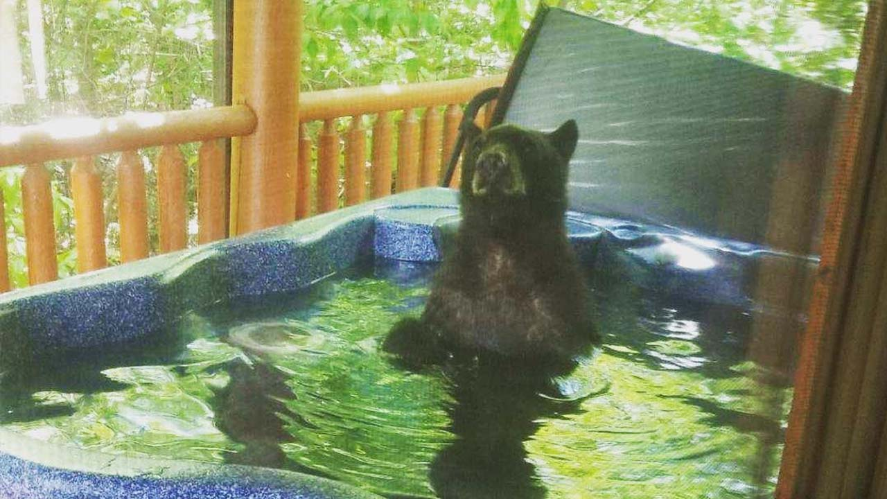 Vacationing couple shocked to find a bear in their hot tub thumbnail