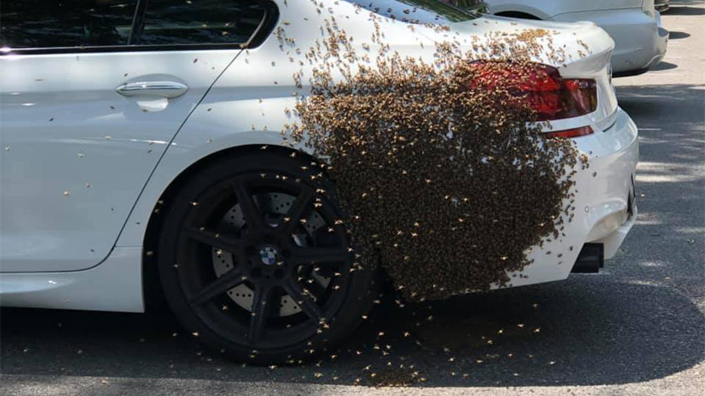 Westlake Legal Group swarm-on-car Swarm of bees discovered on car in Virginia, prompting response from fire officials fox-news/us/us-regions/southeast/virginia fox-news/us/crime/police-and-law-enforcement fox-news/science/wild-nature/insects fox news fnc/us fnc Elizabeth Zwirz article 03c3454c-b541-5e5f-9bdb-9e9cd1e90f04