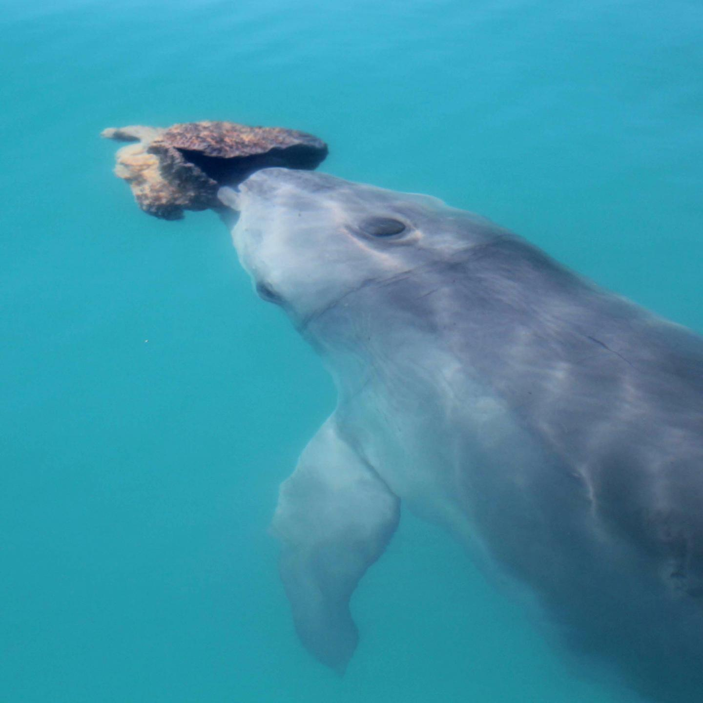 Dolphins form friendships through shared interests just like humans, scientists find