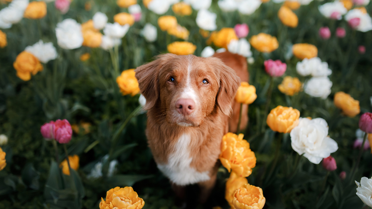 Pet summer safety: 5 plants that are toxic for cats and dogs