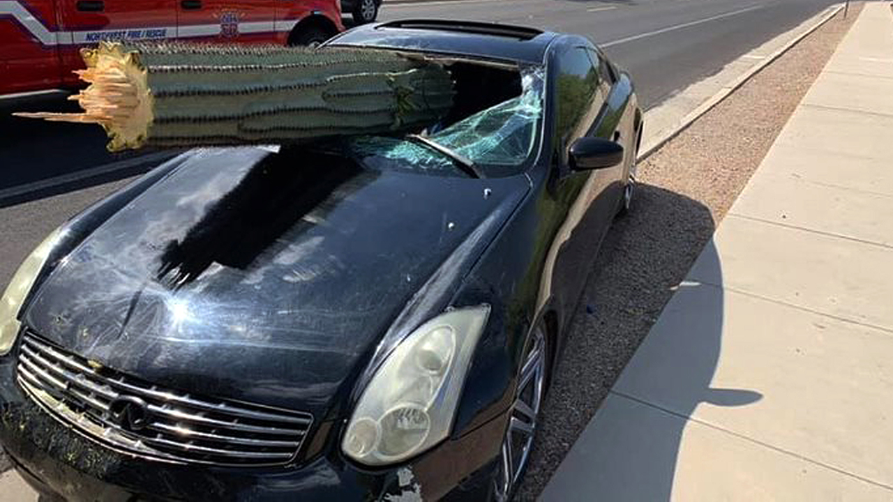 Westlake Legal Group Car Giant cactus pierces car windshield on Arizona highway, driver miraculously unhurt Vandana Rambaran fox-news/us/us-regions/southwest/arizona fox-news/odd-news fox news fnc/auto fnc article 69b5f4ab-f9e3-54ce-9038-54a2e6ff8da3