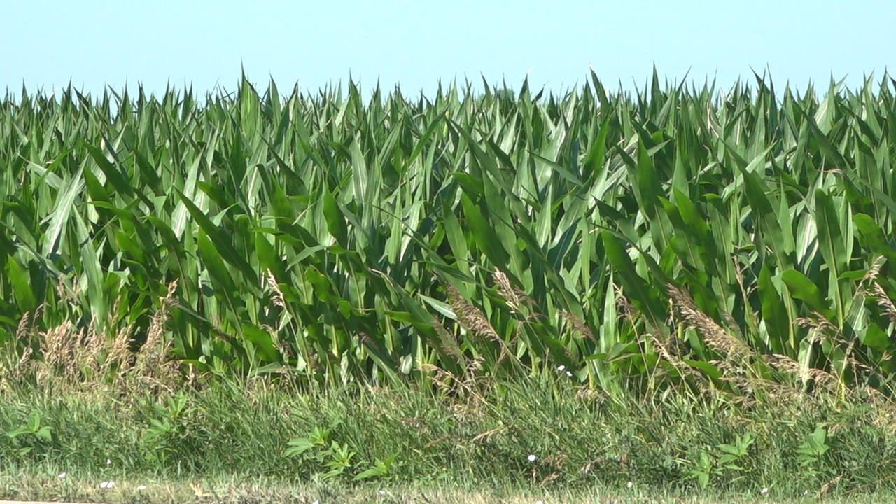 Westlake Legal Group Cornfields Body of 29-year-old mother found in Iowa cornfield, few answers fox-news/us/us-regions/midwest/iowa fox news fnc/us fnc Brie Stimson article 158aec1b-6be9-532f-86cf-876930c540be