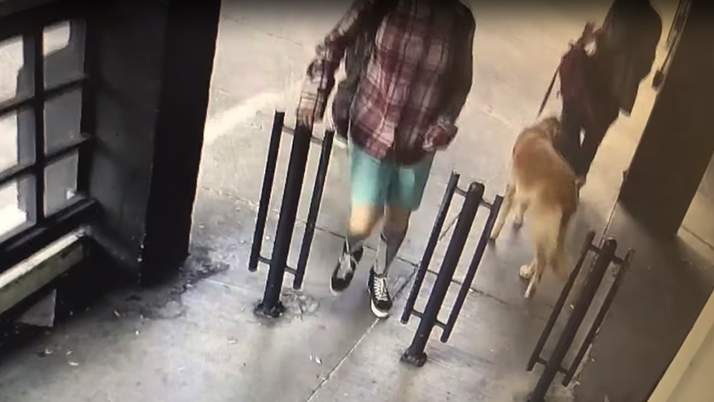 Westlake Legal Group Dog-lost-3 San Francisco woman's pet dog stolen in front of market on video Talia Kaplan fox-news/us/us-regions/west/california fox-news/us/crime/robbery-theft fox news fnc/us fnc article 3631aad3-9ef1-5e74-a575-4c86ea7905a5