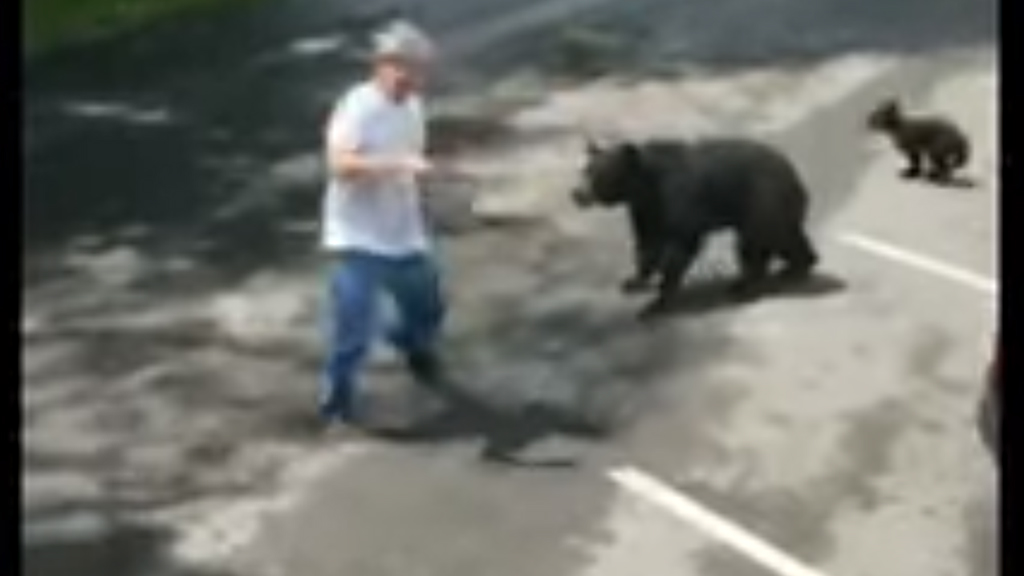 Westlake Legal Group Mother-Bear Video shows bear charging man who came within feet of cubs in Tennessee Talia Kaplan fox-news/us/us-regions/southeast/tennessee fox-news/us fox news fnc/us fnc article 3d8c4a77-602d-5539-809b-d2f329244e96