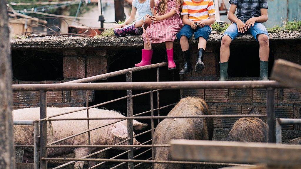 Westlake Legal Group pig-scramble-iStock California fair organizers, citing animal welfare concerns, do away with 'pig scramble' in favor of watermelon event, report says fox-news/us/us-regions/west/california fox news fnc/us fnc b845466c-93b1-595c-b8b8-d102a8b61389 article