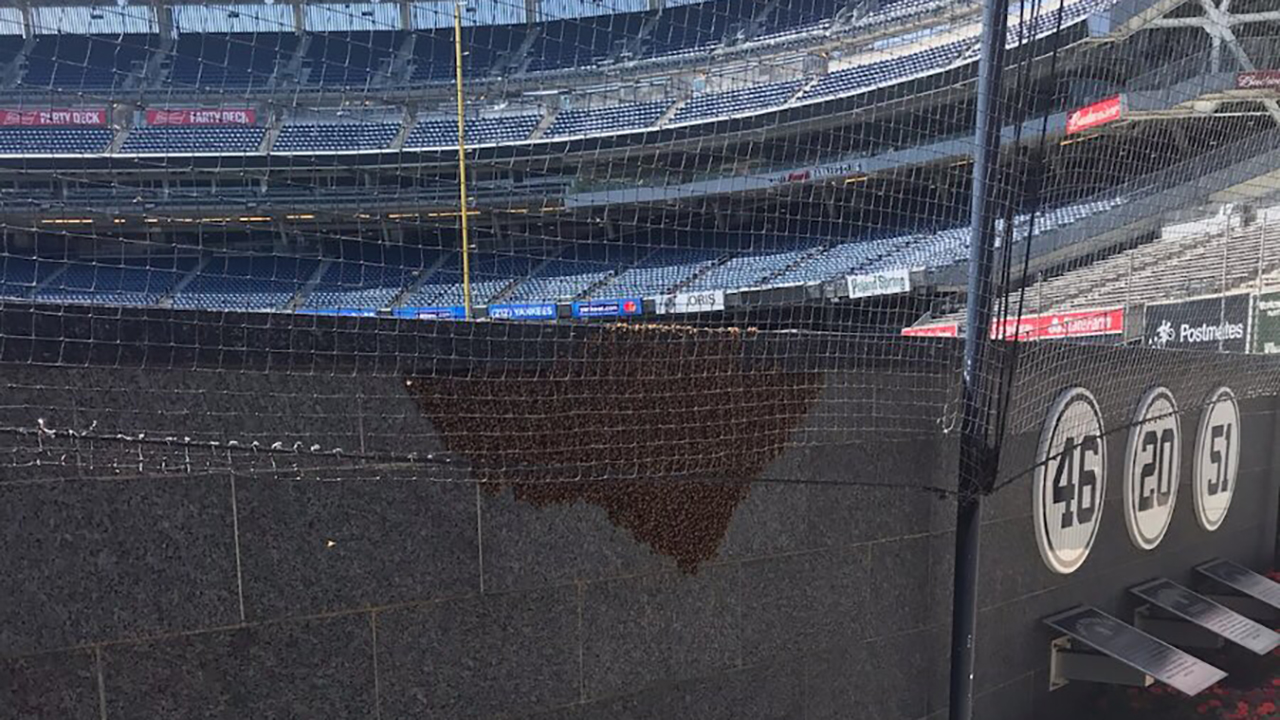 New York's Yankee Stadium hit by swarm of 25,000 bees before game