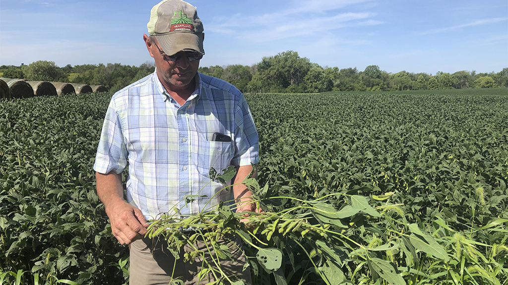 Midwestern farmers eye USMCA deal for relief amid China trade war