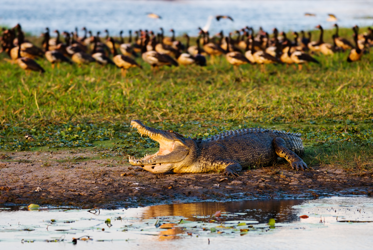 Crocodile shocks anglers, snatches catch off the line